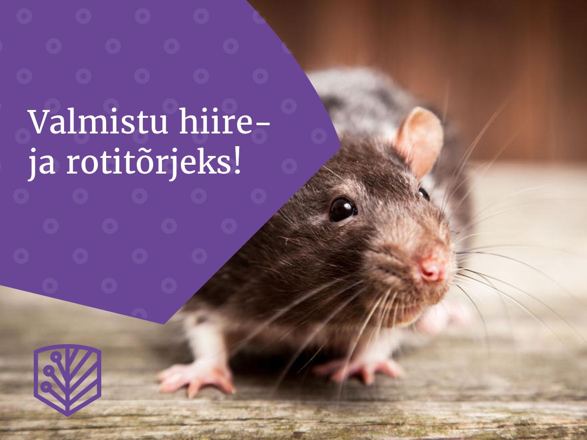 hiir_ja_rott