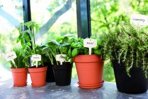 green-basics-growpot-i4