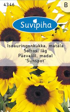 8711117434603_Päevalill_Sunspot_madal_Suvipiha