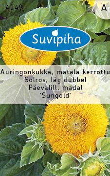 8711117434801_Päevalill_Sungold_madal_Suvipiha