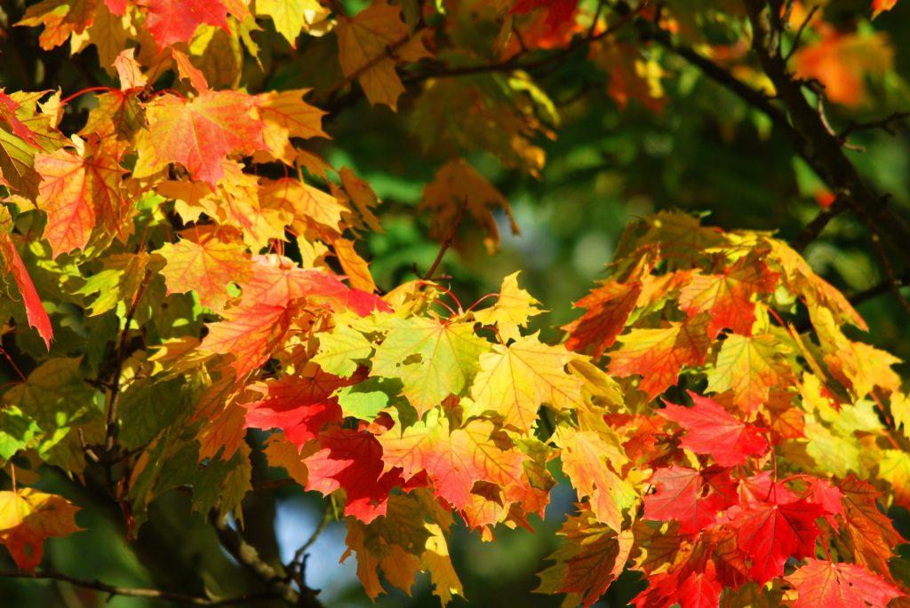 autumn-209479
