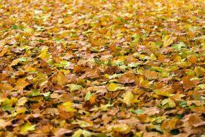 autumn-940401_1920